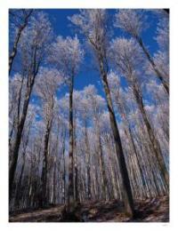 CHKO Blanský les