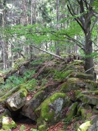 Věnec, výstup na halštatské hradiště u Lčovic a trek ze Zálezel do Vlachova Březí