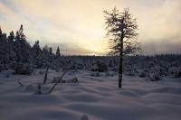 Zimní Šumava - pár obrázků