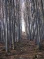 Lesní komplex je v masivu severozápadní části Blanského lesa, 2 km od obce Lipanovice.