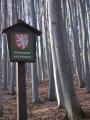 Přirozená lesní společenstva květnatých bučin a suťových lesů s plošně rozsáhlými porosty měsíčnice vytrvalé. Početné jsou populace druhově pestré a specifické fauny bezobratlých a avifauny, listnaté porosty a sutě.