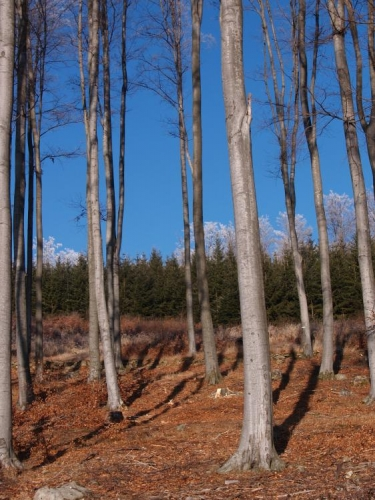 Tady, pod Vysokou Bětou, se povedlo zachytit den před loňským silvestrem neskutečně azurovou oblohu spolu s ojíněnými vrcholky stromů, paráda!