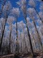 """Zcela překvapivě pro mě tahle fotka znamenala ve fotosoutěži Hnutí Duha """"Lesy, nelesy""""-""""Krásy lesa"""" 1.místo a skvělou supervelkou Váchalovu knihu Šumava umírající a romantická (repro jeho dřevorytů spojených s psanou poetikou Šumavy)."""