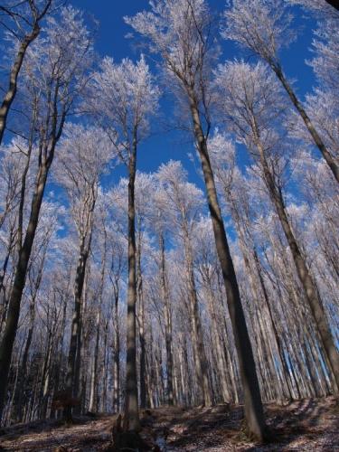 """Zcela překvapivě pro mě tahle fotka znamenala ve fotosoutěži Hnutí Duha """"Lesy, nelesy"""" –"""" Krásy lesa"""" 1. místo a skvělou supervelkou Váchalovu knihu Šumava umírající a romantická (reprodukce jeho dřevorytů spojených s psanou poetikou Šumavy)."""