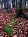 V rezervaci, která se nachází na západních svazích Bulového, asi 3 km jihozápadně od obce Brloh je chráněn podhorský smíšený les s převahou buku lesního a rozsáhlé mrazové sruby. Porosty jsou ponechány přirozenému vývoji.