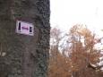 A ještě stránky na kterých se lze doklikat k mnoha chráněným rezervacím v CHKO Blanský les. http://www.ckrumlov.info/docs/cz/atr74.xml