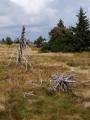 Hřebenovka vede krásnou krajinou s dalekými výhledy a stále lehce klesá.