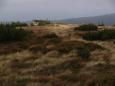 Mezi Šerákem a Keprníkem jsou porosty horského smrkového lesa pralesového charakteru. Místy se vyvinula vrchoviště s typickými rostlinnými druhy.
