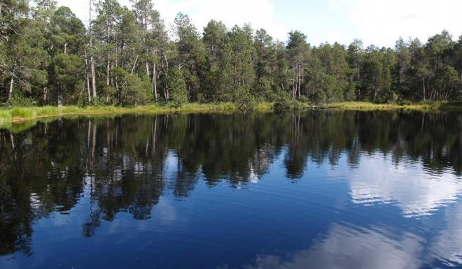 Součástí rezervace Rejvíz je rozsáhlý komplex rašelinných luk v prostoru mezi Velkým a Malým mechovým jezírkem. Charakteristická je pro ně vysoká hladina podzemní vody a rozsáhlé porosty rašeliníku. Pestrost vegetační struktury tohoto typu luk je určována dominantními druhy – nejčastěji ostřicemi, Skřípinou lesní (Scirpus sylvaticus), Pcháčem potočním (Cirsium rivulare), přesličkami, Tužebníkem jilmovým (Filipendula ulmaria) a proto jsou louky kolem Rejvízu nejenom mozaikou druhů, ale podle ročních období i pestrou paletou barev. K nejvzácnějším zde patří Ostřice chudokvětá (Carex pauciflora), Tuřice odchylná (Vignea appropinquata), Tuřice blešní (Vignea pulicaris), Bazanovec kytkokvětý (Nanburgia thyrsiflora), Hladilka obecná (Ophioglossum vulgarum), Mečík střecholistý (Gladiolus imbricatus) a mnohé další.