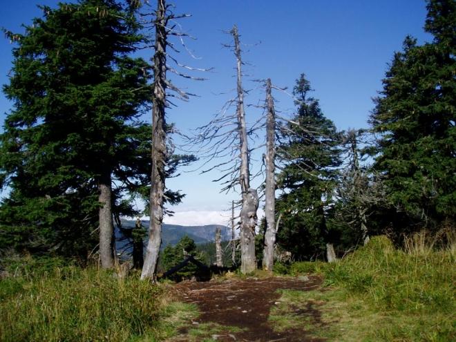 Cesta je asfaltová, bohužel žádná divočina a nahoru míří spousta turistů.