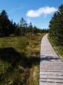 Směrem na Malý Jezerník se nachází vrchovištní slatě, přes které vede tento chodník.