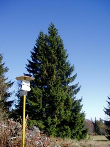U Doupné hory a rozcestí Sněžná (1 020 m. n. m.) se dočkáme i zelené turistické značky a stáčíme po ní své kroky zpět k Arnoštovu.