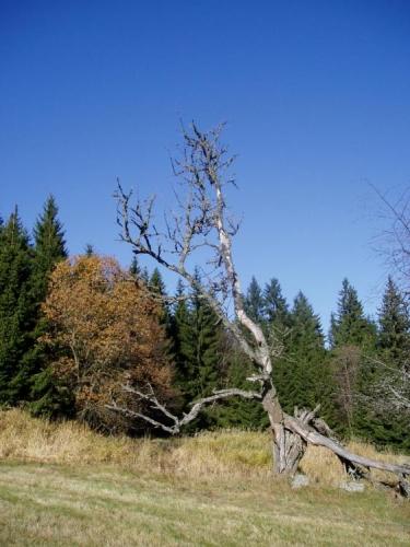Je stále co fotit, barvy krajiny se mění a my si vychutnáváme slunný konec října.