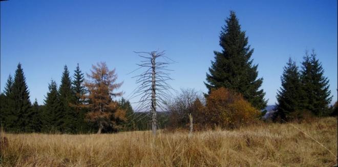 Lesy kolem nás jsou i zde většinou smrkové, ale někdy se přece jen objeví i jiné, barevnější. Značka se klikatí od Sněžné hodně po lukách a příjemně nám ubíhá.