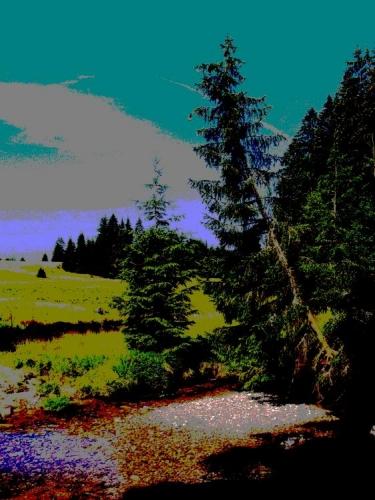 Říčka Světlá se u Nového Údolí vlévá do Studené Vltavy a její břehy lemují nánosy říčního písku.