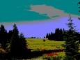 U Nového Údolí se lesy střídají s loukami, ve kterých se klikatí Studená Vltava v přírodní rezervaci Spálený luh.