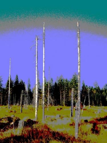 Kiril dokonal dílo zkázy a smetl z pohledů většinu mrtvých stromů.