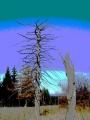 I lesní velikáni mají svůj čas přesně určen.