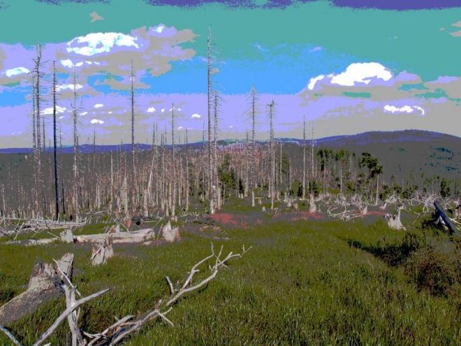 Rozlehlé byly lesy ještě před nedávnou dobou.