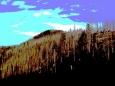 Záchrany již není pro tyto lesy  Roklanu, co celé věky odolávaly přírodním živlům.