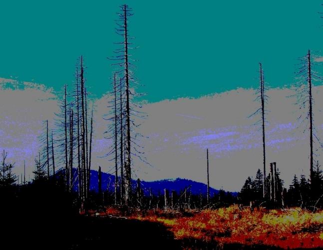 Zaražené hluboko do země zejí pahýly stromů jako vykřičníky nad Novohuťskými močály.