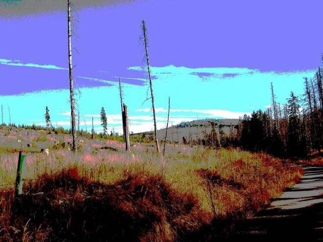 Do Modravy, podél Modravského potoka, kopíruje břehy pro pěší nepříjemná asfaltka.