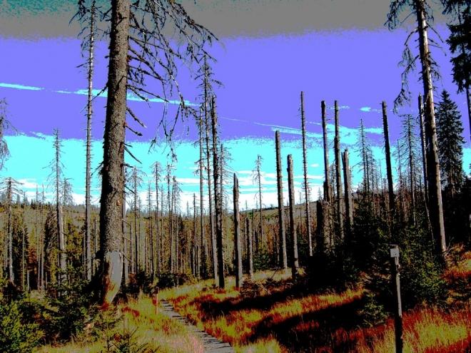 Snad co nejdříve zmizí včechny otevřené rány a spolu s nimi i tato Zážitková stezka suchým, smutným lesem.