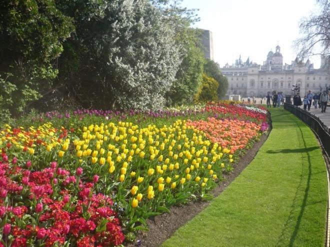 Tulipány a další květinky :-)