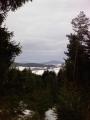 Pohled při cesta na rozhlednu (mezi stromy)