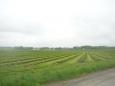 Další ovocná pole