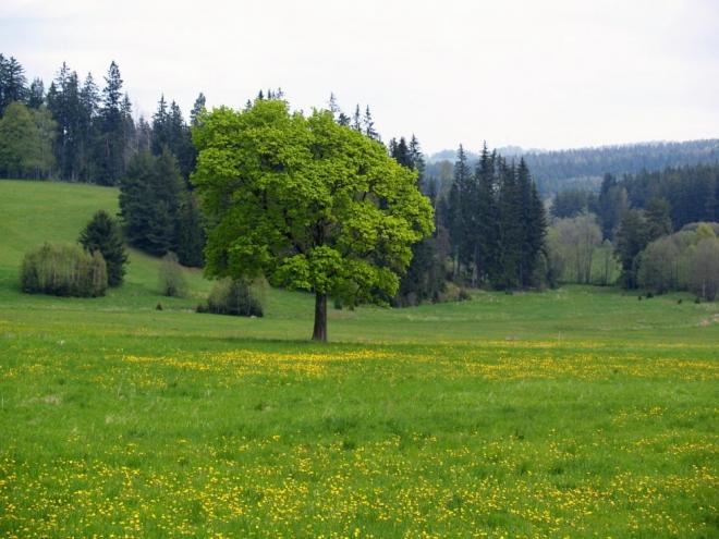 Krajinou luk a lesů stále nabíráme výšku, většina naší cesty vede v tisíci metrech.