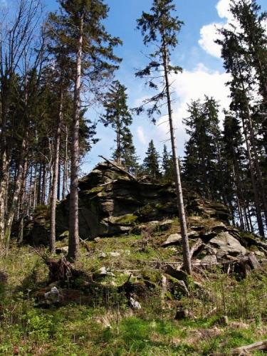 To, co jsme zdola považovali za vrchol Knížecího stolce, jsou jen skály s posledními zbytky lesa. Celý kopec je po orkánu Kirill odlesněný a čerstvě osázený stromky. Dole spíš jeřebinami, zde výš smrky.