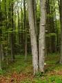 Vybírám mě známou cestu lesy rovnou na Křišťanov. Kolem se střídají smíšené lesy se smrkovými. Je tady znát, že se hodně těží.