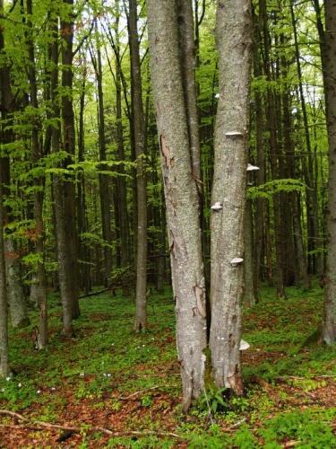 Vybírám známou cestu rovnou na Křišťanov. Kolem se střídají smíšené lesy se smrkovými. Je tady znát, že se hodně těží.