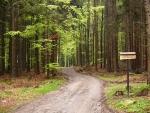 Cesty jsou všechny pojmenovány, asi právě pro těžební práce a lepší orientaci dřevařů.
