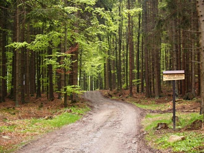 Cesty jsou tady všechny pojmenovány, asi právě pro těžební práce a lepší orientaci dřevařů.