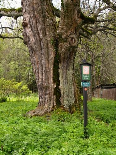 U Křišťanova je už cesta dobrá, mijíme letitý strom a míříme ke kostelu.