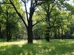 Hlubocko i zlivsko je žlutě označenými trasami poseto a tak si i cestu na Hlubokou můžeme vybírat. Jedeme po 1084 klidnější a zajímavější cestou kolem dubového háje se staletými duby k Vondrovu.