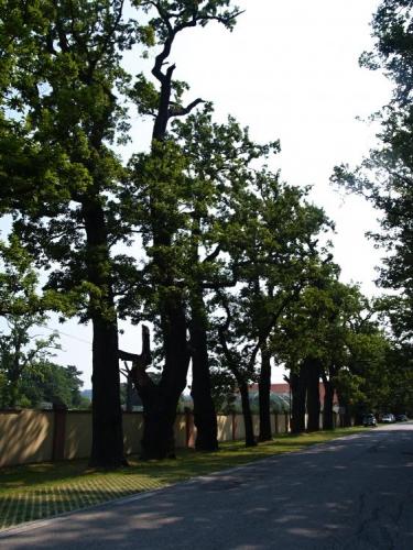 Alejí statných dubů se kolem ZOO a restaurace dostáváme k zámku Ohrada s muzeem historie lesnictví, lovectví a myslivosti, rybářství a rybníkářství. Je zde sbírka loveckých trofejí, preparované zvěře, loveckých zbraní, herbářů, sbírka ornitologká i entomologická. V zámeckém interiéru spatříte sál s freskou bohyně lovu Diany a pokoj se souborem nábytku z paroží. Vedle zámku vstup do hojně navštěvované a měnící se ZOO.