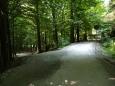 Vystoupáme na nově opravenou cestu vedoucí z obory, kolem jsou především buky a listnaté stromy.