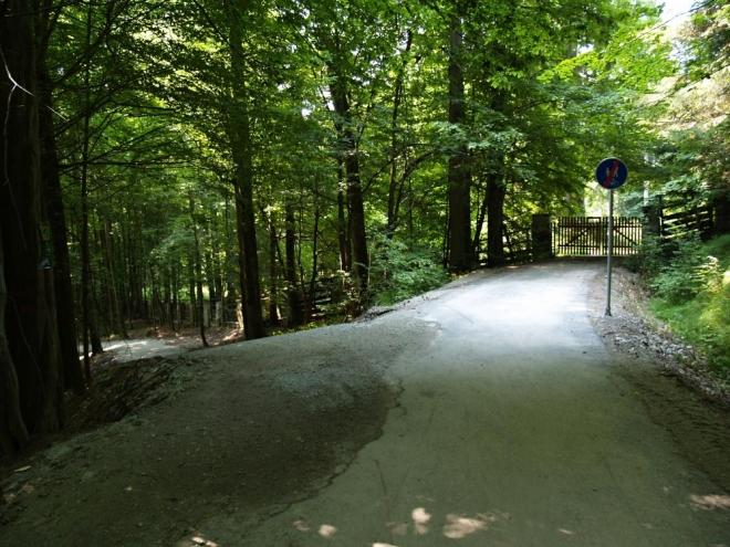 Vystoupáme na nově opravenou cestu vedoucí z obory. Kolem jsou především buky a listnaté stromy.