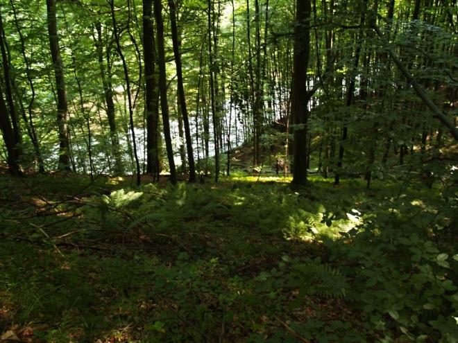 Relaxační charakter jízdy lesem je umocněn tichem.