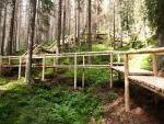 A jak se vám líbí tato monstrózní konstrukce po které se k prameni dostanete? Navíc, protože jsou již i zde zlikvidované stromy kůrovcem, zanedlouho můžou zbýt z přechodu torza. Stromy okolo už padají k zemi.