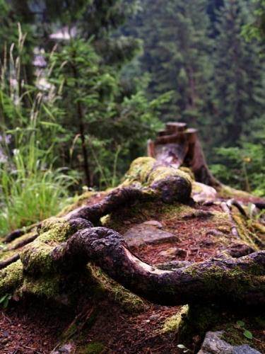 Kolem jsou smrkové stromy těžebních velikostí, zatím je zde ještě posvátný klid.