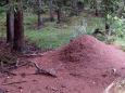 Posilněni se vracíme k rybníku a stále po modré stoupáme k polesí, ve kterém jsou bunkry bývalého pohraničního opevnění. Nehledáme je, víc nás zaujalo množství a velikost mravenčích obydlí.