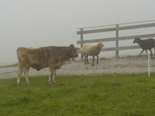 """""""Kdopak to k nám zase přišel?"""" ptají sebe navzájem krávy a ovce."""