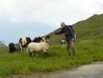 Taťka balí ovci...