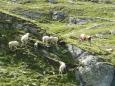 Komunita ovcí a krav, snad jsou si všichni skutečně rovni a nikdo si není rovnější.