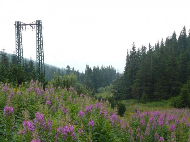 Zpocení jsme prudkým stoupáním konečně vyšli nad hranici lesa. Škoda, že jsme se zároveň vyskytli v mraku, a tak nebyl výhled.