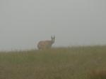 V mlze, která nás opět pohltila, jsme zahlédli i nějaké místní, jak po nás pokukují.